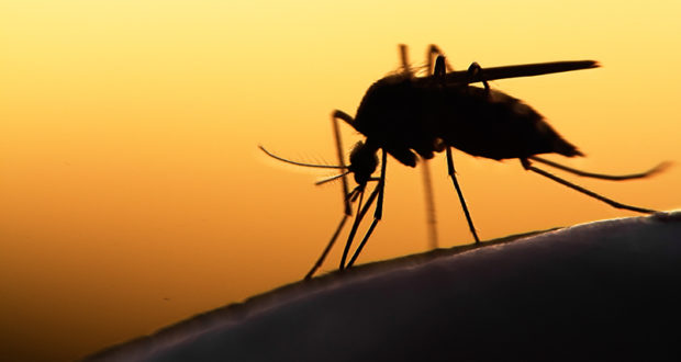 Mückenstiche bei Histaminintoleranz